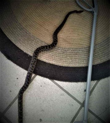 SEQ Snake Catcher servicing Brisbane, Gold Coast, Ipswich, Logan - large snake caught on a patio carpet