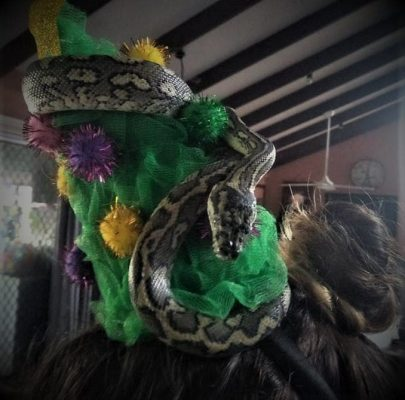 SEQ Snake Catcher servicing Brisbane, Gold Coast, Ipswich, Logan - large snake wrapped in woman's head dress