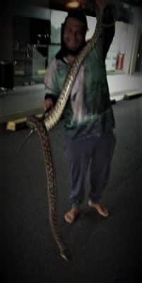 SEQ Snake Catcher servicing Brisbane, Gold Coast, Ipswich, Logan – large caught in parking lot 3