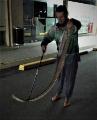 SEQ Snake Catcher servicing Brisbane, Gold Coast, Ipswich, Logan – large caught in parking lot 2